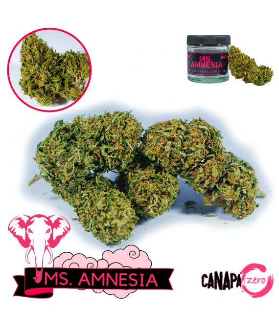 Amnesia Haze by CanapaZero