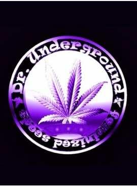 Dr.underground