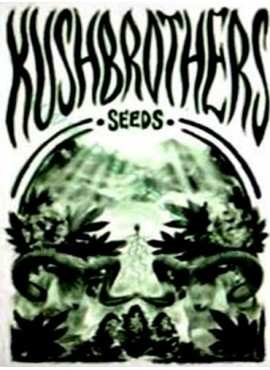 The kush brothers seeds
