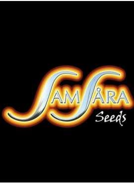 Semi - Samsara seeds