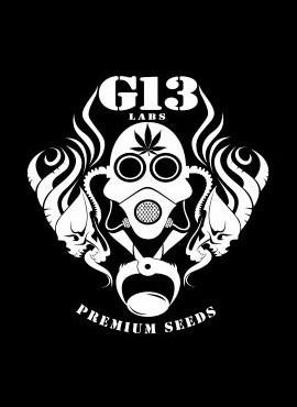 G13 LAB