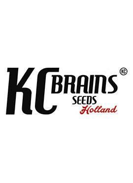 KC BRAIN