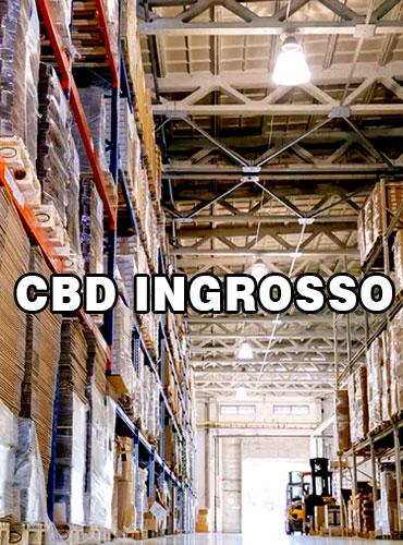 cbd ingrosso