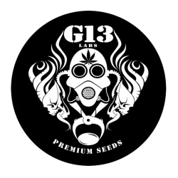 G13 LABS